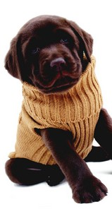 Pull-Overs pour Chiens