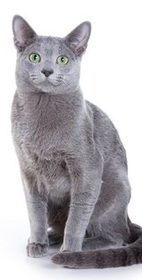chat-animalerie-magasin-croquettes-service-Pau-64